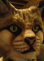 Sandcat WIP by stuffedpanda-cosplay
