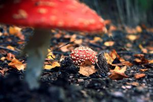 Raise of the Mushrooms by FlorentCourty