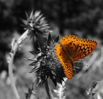 Butterfly1 by RyanColes