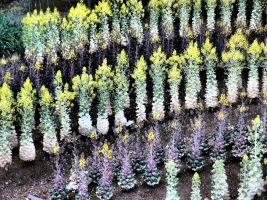 JAPAN STOCK FLOWER PLANT NO:040030184 by hirolus