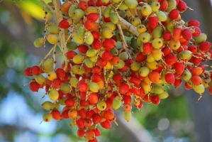 Tropical Fruit by Velendron