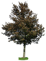 tree 26 png by gd08