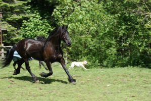 Friesian Trot by OnlyYouCan