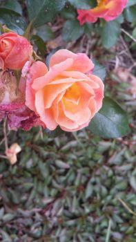 Beauty in Life and in Death by Bonnie-L-Price