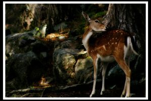 Fallow Deer by nightwibe