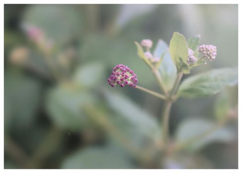 A small flower by Loreana10