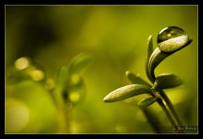 Spring, please by Bruinen