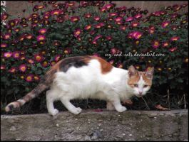 531 by evy-and-cats