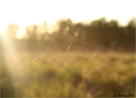 spider's web by PinkPerfume