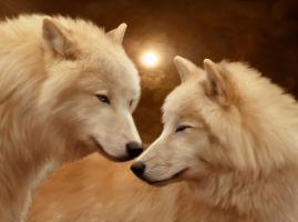 White wolves by ElenaDudina