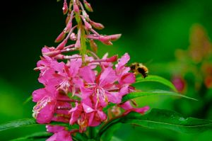 Mumbling Bumbling Bee by Pickles4LES
