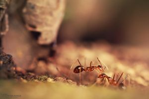 Ants Life by mo-ten