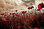 poppyworld by ThomasSchulz-Woelfer