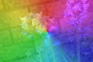 Rainbow Flowers :D by HeartANGELfied