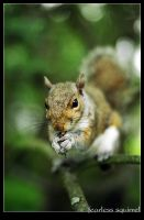 fearless squirrel by arkasha