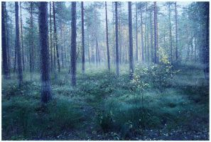 BG Misty Forest by Eirian-stock