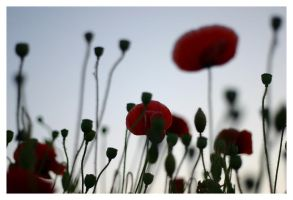 tall poppy syndrome by lightandshadow