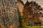 Maple tree at Coburg Castle by joachim-hagen