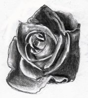 Rose for tattoo design 3 by Drewnique