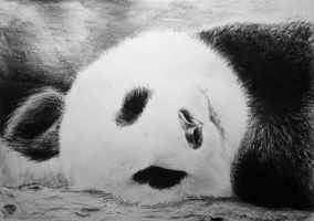 Charcoal Panda by darrenOhhh
