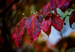 Autumn leaves turning color by Tailgun2009