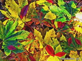 Colorful Leaves by jim88bro