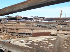 Paddock Corral Thingamabob 3 by Confussed-Stock
