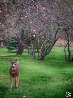 Me likes apples... by ShannonCPhotography