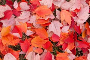Fall Colors by tCentric-media