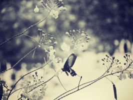 Butterfly2 by salacia33