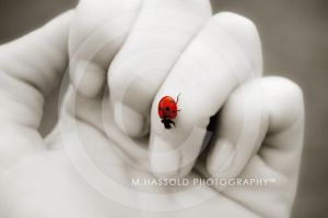 Why love is red - Ladybug by Finvara