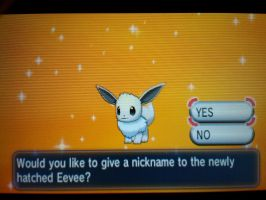Pokemon X: Shiny Eevee after 1,200+ Eggs!!!! by xMaikoWolfx