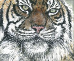 Yet another tiger by acrylicwildlife