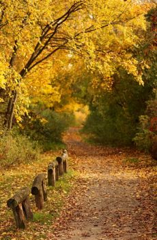 The Path to Autumn by Einsilbig