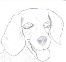 Valerie the Beagle by Terriermon