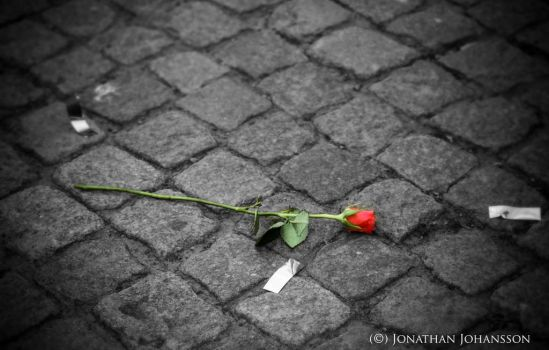 The rose on the ground by JonathanJohansson89