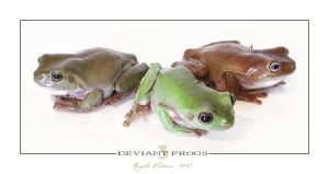 3 Deviant Frogs by lilnymph