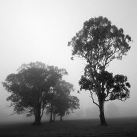 Mist by Jeroneos
