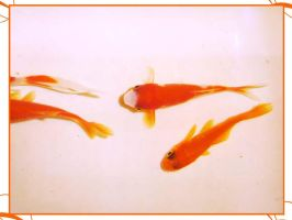 ...Retro goldfishes... by sofille