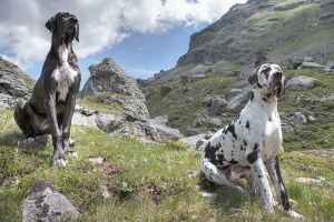 avo and arista enjoy the view by swissloko