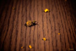 Suicide Snail by Juuro