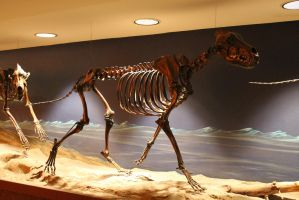 dire wolf skeleton stock by Billy-jean-stock
