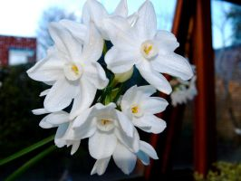 White Flowers by Lil-Plunkie