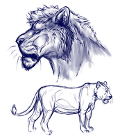 Realistic lion sketches by Osire