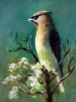 Cedar Waxwing by MountainInspirations