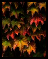 Wall of Autumnal Leaves by StudioFovea