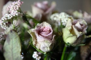 The Dreams of the Roses by WhiteBook