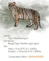 Wildlife Project : Bengal Tiger by Geronimo24