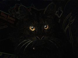 Horror Movie Cat by Zach76