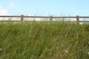 Stock - Flowery Grass Verge by GothicBohemianStock